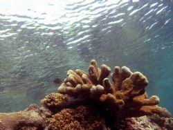Reflections - Bunaken reeftop. Cannon D10. I just loved t... by John Akar