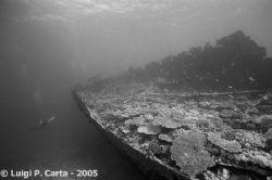 Kalinka and the wreck. Sharm El Sheikh, Egypt. Canon eos ... by Luigi Carta