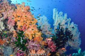 Reefscape by Leena Roy