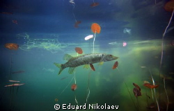Nirvana by Eduard Nikolaev