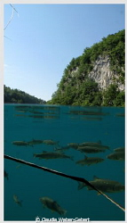 plitvice lakes - freshwater split shot by Claudia Weber-Gebert