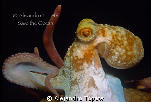 Octopus in the dark,Cozumel Mexico by Alejandro Topete