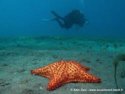 seastar in the Cousteau Marine Park by Alex Zeni