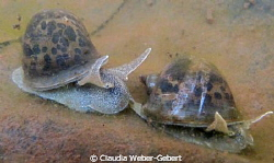 ...THE RACE.... ;-)