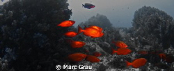 Black and White in Red by Marc Grau