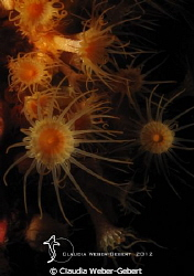 fireworks....