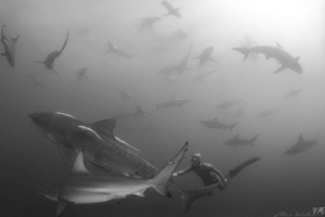 Image taken with Hanli (S.A. Ladies Free Diving champ) an... by Allen Walker