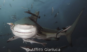 shark tale.......... by Afflitti Gianluca