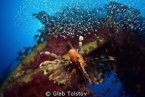 The king by Gleb Tolstov