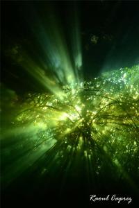 Lighting atmosphere in Mexico cenote (Jardin del Eden) by Raoul Caprez