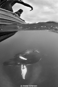 Humpbacks in the Silver Banks. Half half. by Christian Schlamann