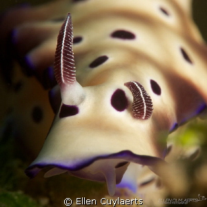 'One Down'