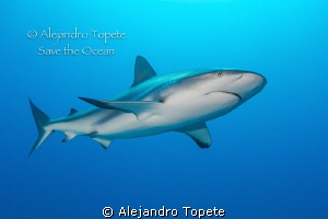 Shark Sorrounding, Gardens of the Queen Cuba by Alejandro Topete