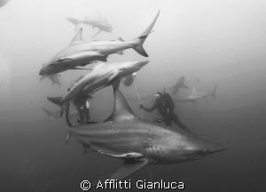no fear... by Afflitti Gianluca
