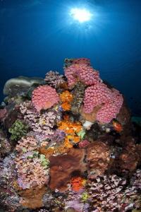 Reef Scene from Komodo by Stew Smith