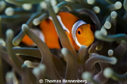 """Look at me  NIKON D7000 in a Seacam """"Prelude"""" uw housin... by Thomas Bannenberg"""