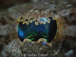 Crocodile Fish Eye by Oktay Calisir