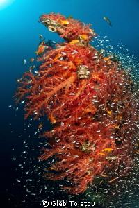 Soft corals on Satil wreck by Gleb Tolstov