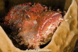 My home is a cup in the ocean by Peet J Van Eeden