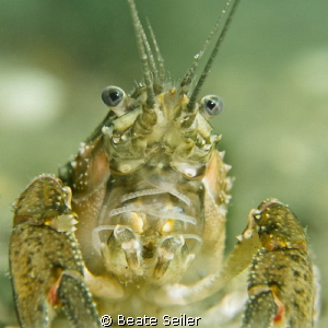 Cray fish by Beate Seiler
