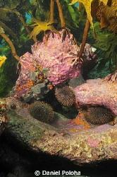 Under the kelp forest canopy by Daniel Poloha