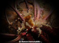 Rare and Super Macro crab by Azman Kamaluddin