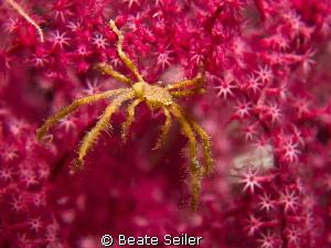 I love pink by Beate Seiler