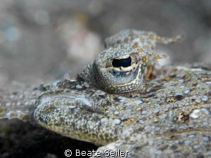 Flounder close up by Beate Seiler