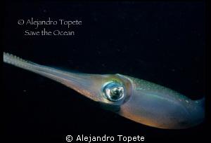 Squid in black, Veracruz Mexico by Alejandro Topete