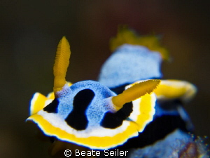Nudi by Beate Seiler
