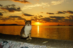 Seawall kitty loves Awase Bay in Okinawa, Japan by Troy Williams