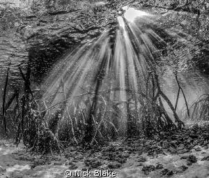 Mangroves and Sun Rays. Komodo, Indonesia. by Nick Blake