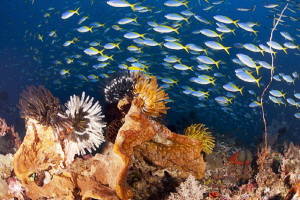 Castle Rock - Komodo. Always a spectacular fishy dive by Stew Smith