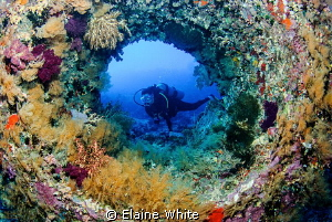 Enjoying a dive looking through colourful, coral encruste... by Elaine White