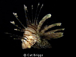 night charger. lionfish hunting. taken with Canon s95 wi... by Cat Briggs