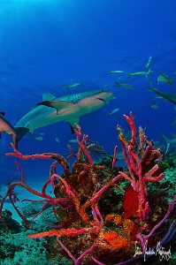 Laying low in the reef to get the passing by visitors of ... by Steven Anderson