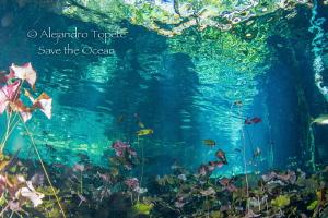 Amazing Colors, Gran Cenote Mexico by Alejandro Topete