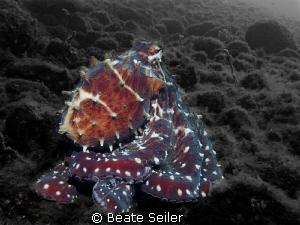 Octopus by Beate Seiler