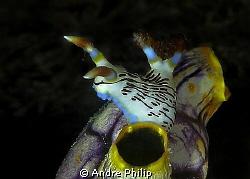 look into the night - Nembrotha lineolata by Andre Philip