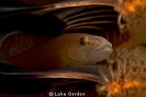 Hiding in a sea pen.... by Luke Gordon