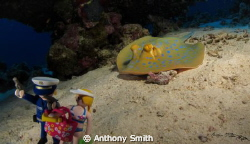 Play with Stingray by Anthony Smith