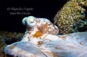 Octopus Flying, Cozumel Mexico by Alejandro Topete