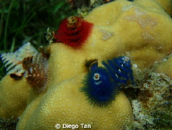 these worms are very hard to capture. Patience and techni... by Diego Tan