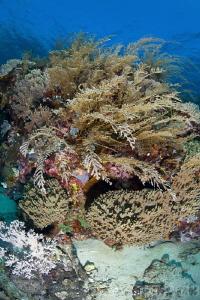 Shallow reef of Komodo by Stew Smith