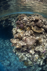 Ras Mohammed reef by Stew Smith
