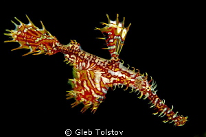 Ghost pipefish by Gleb Tolstov