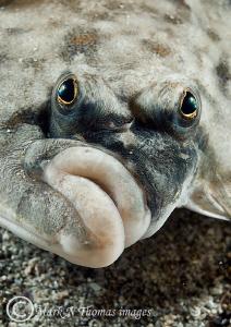 Plaice Face. by Mark Thomas