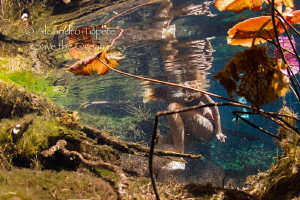 pacefull in the water, Gran Cenote Mexico by Alejandro Topete