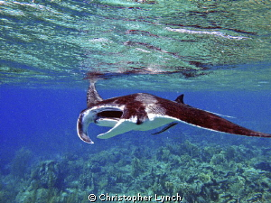 The manta went north ... and came back south...12ft of wa... by Christopher Lynch