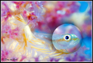 Bubble bokeh by Dray Van Beeck